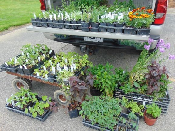 Sale plants small